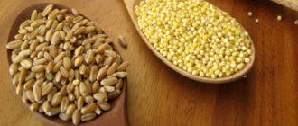 В чём разница между пшеничной крупой и пшеном.